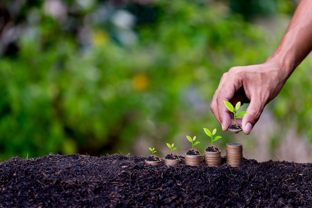 Hand putting money coins like growing graph,plant sprouting from the ground Premium Photo