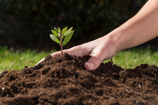 Hand removing soil from a plant Free Photo