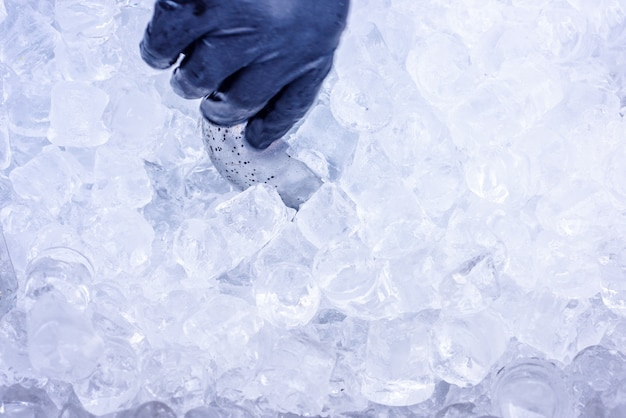Hand taking ice with metal scoop for cocktails Premium Photo