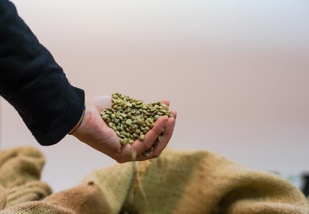 Hand touching coffee beans inside the jute bag Premium Photo