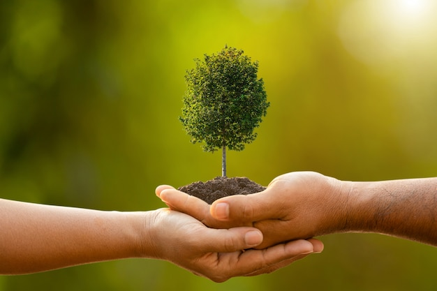 Hand of two people holding tree in soil on outdoor sunlight and green blur  planting the tree, save world, or growing and environment concept Premium Photo