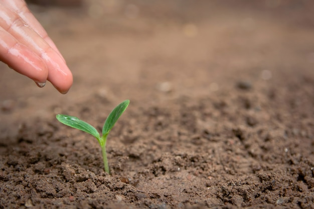 Hand watering green sprout growing from soil with copy space Premium Photo