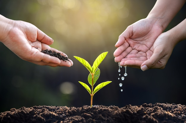 Hand watering plants. female hand holding tree on nature field grass forest conservation concept Premium Photo
