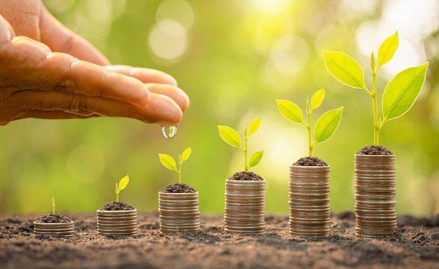 Hand watering to small tree on top of coin stack. business success, financial or money growing concept Premium Photo