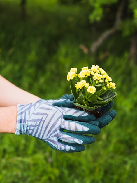 Hand Wearing Gloves Holding Succulent Plant  Free Photo-7746
