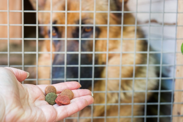 Hand with dog food and a german shepherd in a cage Premium Photo
