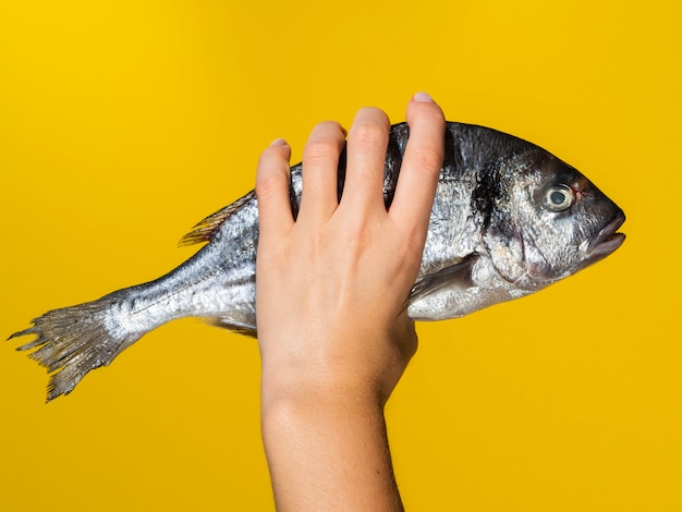 Hand with fresh fish on yellow background Free Photo