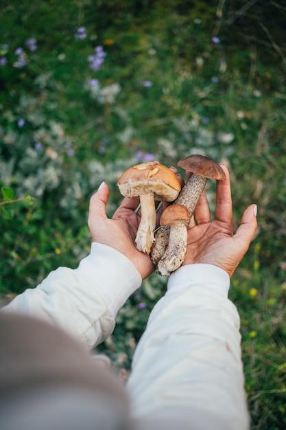 荒野の屋外で健康的なキノコ、レーズン、乾燥キノコを一握り。 無料写真