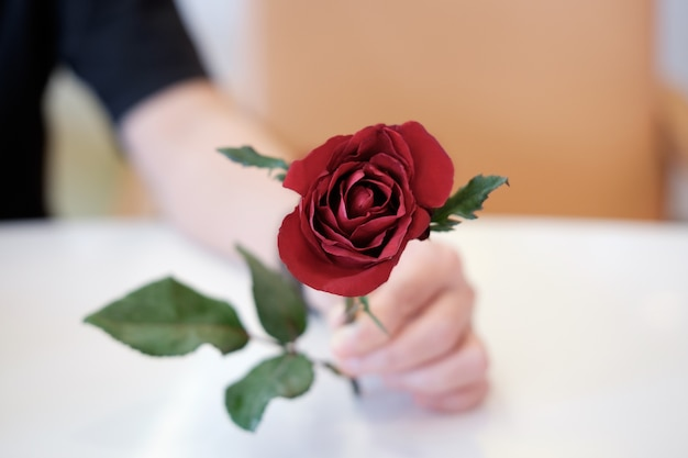 Handing A Red Rose As A Representation And A Symbol Of Love Photo