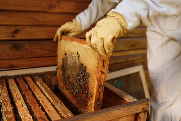 Hands of beekeeper pulls out from the hive a wooden frame with honeycomb. collect honey. beekeeping . Premium Photo
