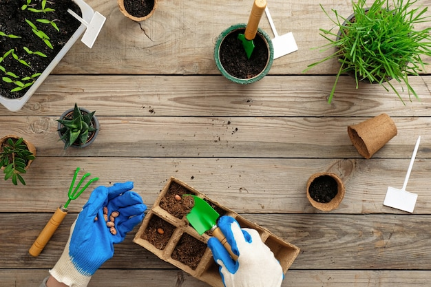 Hands of gardener puts seed in peat container with soil. gardening or planting concept. Premium Photo