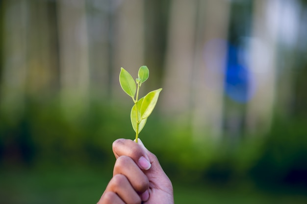 Hands and green leaves beautiful green leafy peak Premium Photo