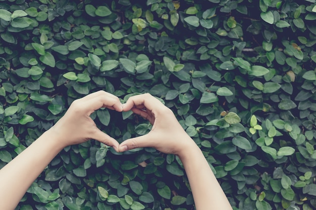 Hands heart shape on nature leave abstract background Premium Photo