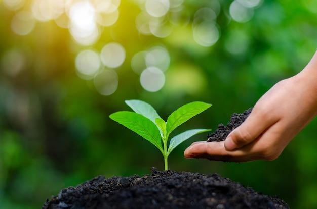 Hands holding growing seedlings Premium Photo
