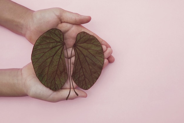 Hands holding kidney shaped leaves, world kidney day, national organ donor day, charity donation concept Premium Photo