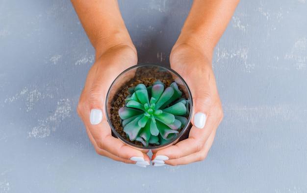 ガラス鍋に植物を保持している手 無料写真