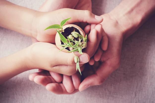 Hands holding seedling plants in eggshells, eco gardening,  montessori education concept Premium Photo