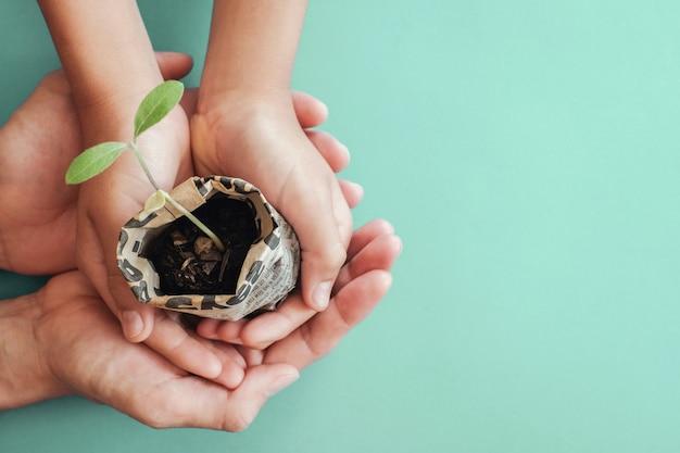 Hands holding seedling plants in newspaper pot Premium Photo