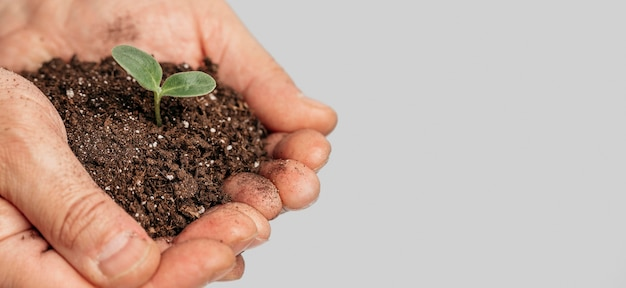 Hands holding soil and growing plant with copy space Free Photo