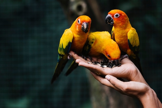 Hands holding wild birds in a zoo Free Photo