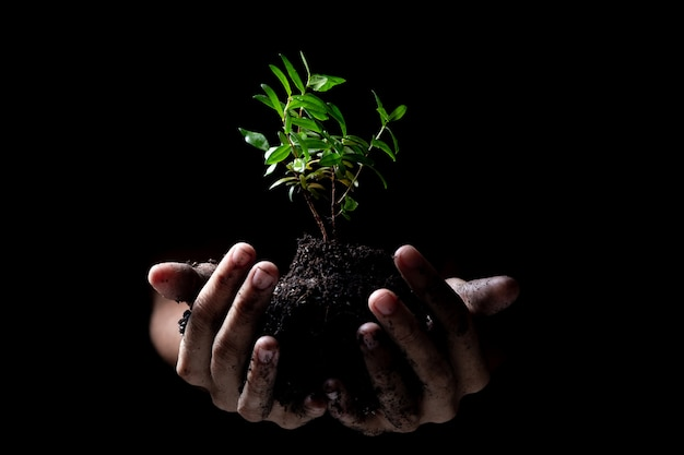 Hands holding a young green plant growing Premium Photo
