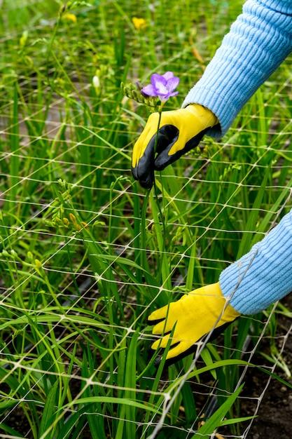 Руки в перчатках с цветами Premium Фотографии