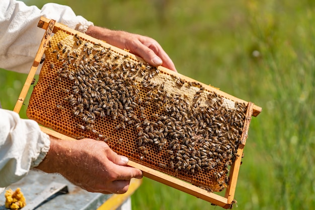 Hands of a man holds a frame with honeycombs for bees in the garden at home Premium Photo
