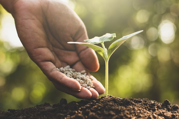 The hands of men are pouring chemical fertilizers into the seedlings. Premium Photo
