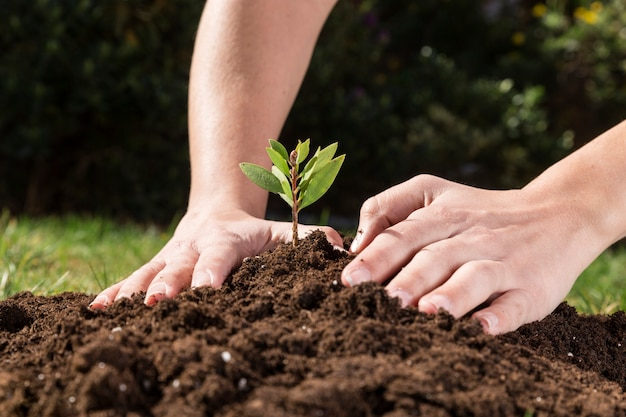 Hands planting a plant to grow Free Photo