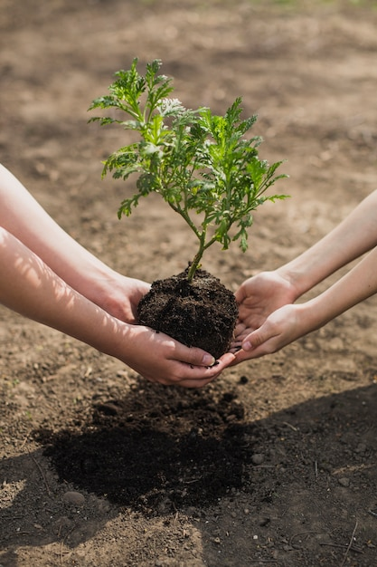 hands planting tree photo free download