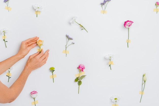 Hands touching spring flowers Free Photo
