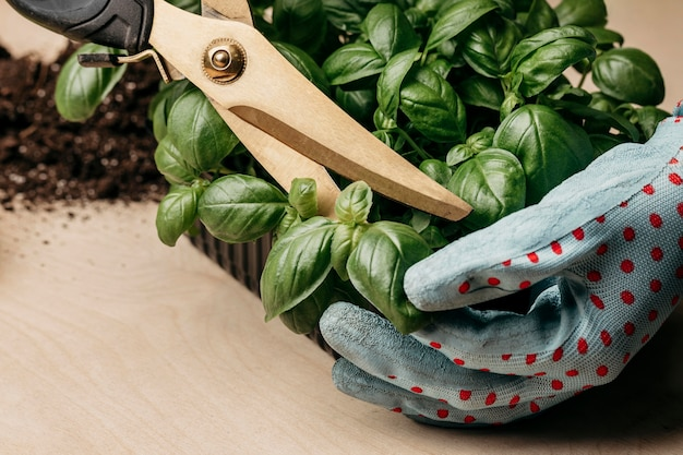 Hands with gloves trimming down herbs Premium Photo