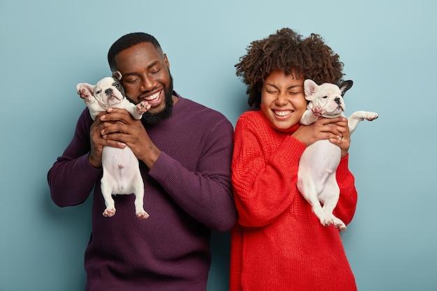 Счастливые афро-американские женщина и мужчина позируют с удовольствием, держат двух маленьких щенков, любят проводить время с собаками, позитивно улыбаются, изолированы от синей стены. семья, счастье, концепция животных Бесплатные Фотографии