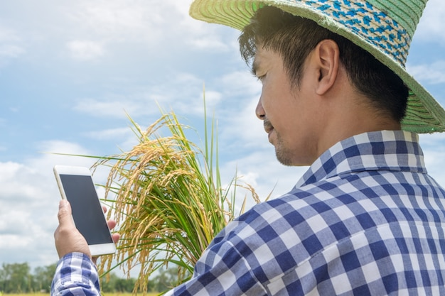 Happy asian farmer man using smartphone and holding gold paddy rice Premium Photo