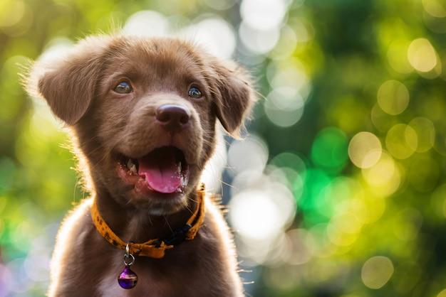 витамины для собак и щенков