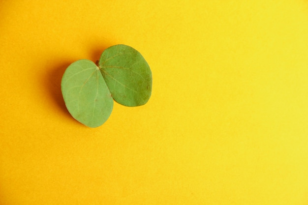 Happy dussehra greeting card , green leaf and rice Premium Photo