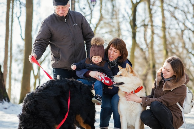 Happy Family Poses With Funny Akita Inu And Bernese Mountain Dog On The Snow Free