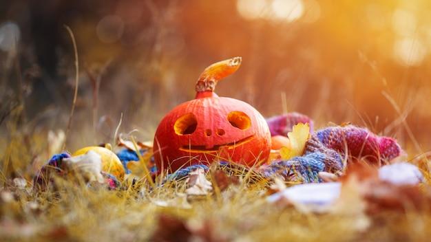 Happy halloween тыква с счастливым лицом в осеннем лесу Premium Фотографии