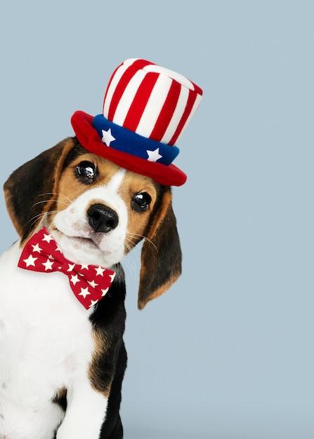 アンクルサムの帽子をかぶったかわいいビーグル犬からの幸せな労働者の日 無料写真