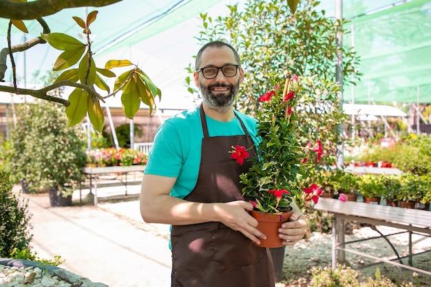 Fiorista maschio felice che cammina nella serra, che tiene vaso con pianta fiorita, colpo medio, spazio della copia. lavoro di giardinaggio o concetto di botanica Foto Gratuite
