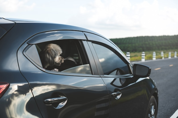 Happy mix breed dog is looking out of window of hatchback black car. Premium Photo