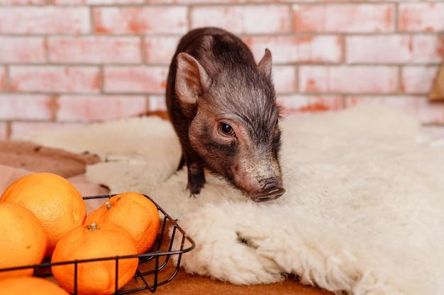 Happy new year, zodiac sign pig, chinese new year Premium Photo