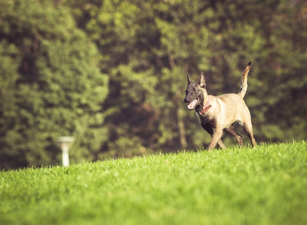 Happy pet dogs playing on grass Free Photo