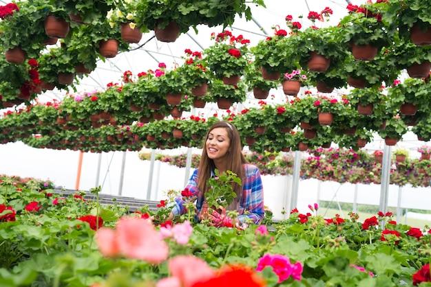 温室の庭で販売のために花をアレンジする幸せな笑顔の花屋 無料写真