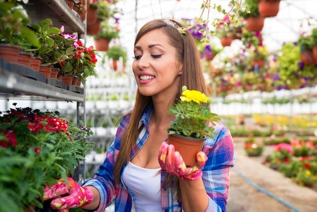 温室の庭で黄色い鉢植えの花を保持している美しい顔を持つ幸せな笑顔の女性花屋。 Premium写真