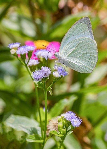 Happy time of butterflies in sunny day Premium Photo