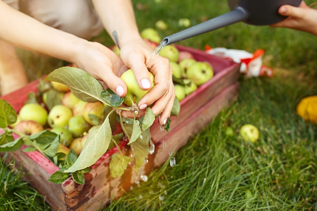 The happy young family during picking apples in a garden outdoors Free Photo