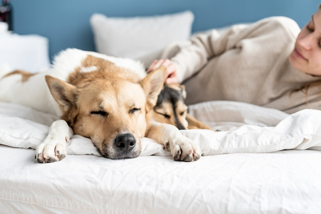 Happy young woman lying in the bed with her dogs, blue wall background Premium Photo