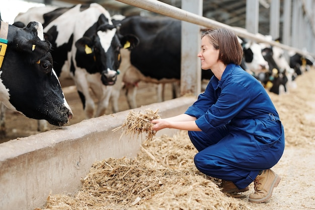 Счастливый молодой работник животноводческой фермы сидит на корточках, держа кучу свежего сена перед дойными коровами во время работы Premium Фотографии