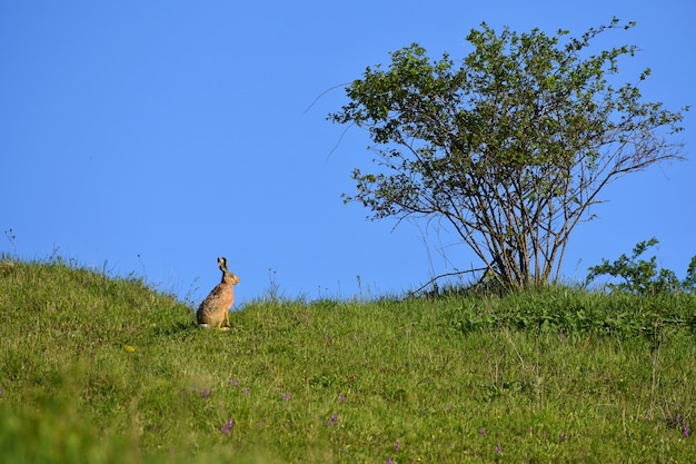 Hare - bunny and tree. spring natural background with animal. Free Photo
